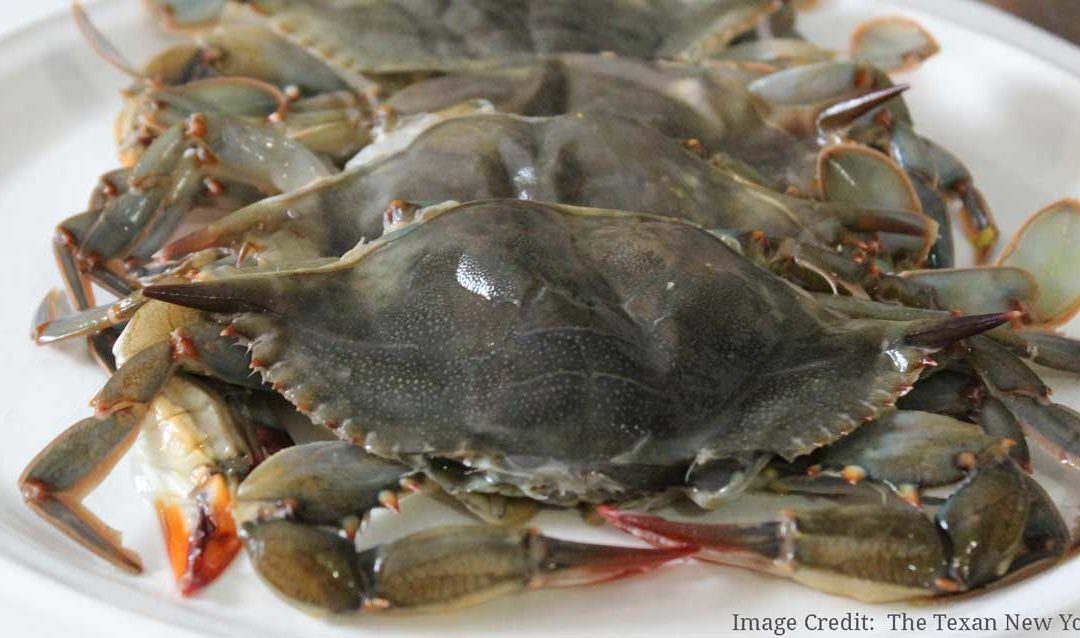 Everything You Need To Know About Maryland Soft Shell Crabs