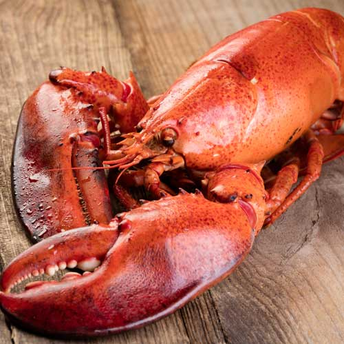 cameron's seafood steamed lobsters