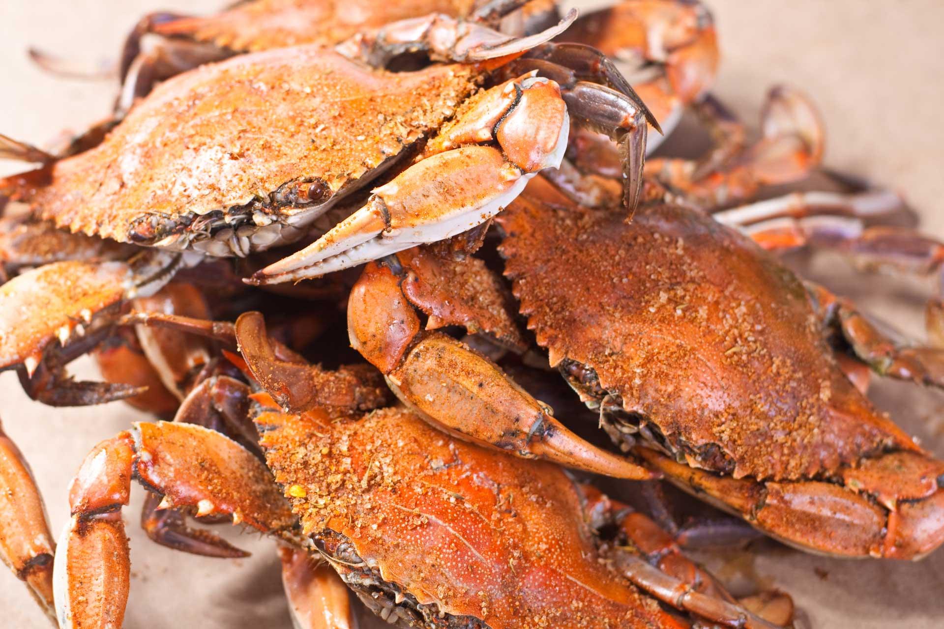 The Difference Between Maryland, Carolina, and Louisiana Crab
